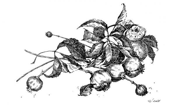 Їжа і магія у різдвяній обрядовості бойків // Наталія Громова