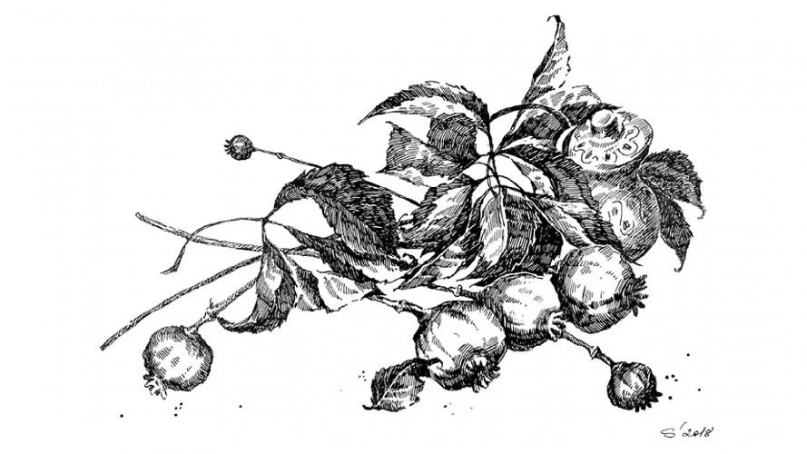 Їжа і магія у різдвяній обрядовості бойків